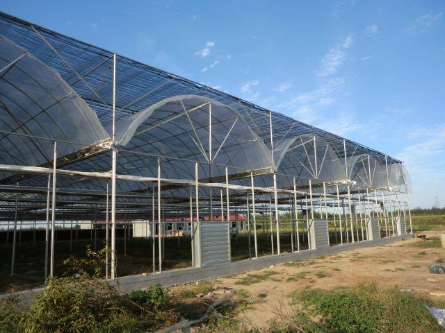山东连栋薄膜温室大棚价格_哪里有提供高性价连栋薄膜温室大棚
