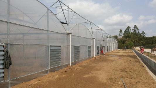 连栋温室大棚建造商 靠谱的连栋温室大棚建设厂家找国聚温室