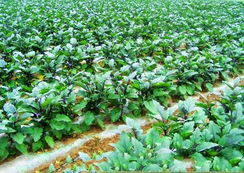 蔬菜配送公司-信誉好的蔬菜配送服务优选杭州语琪蔬菜配送