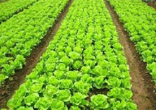 蔬菜配送流程 杭州有口碑的蔬菜配送服務