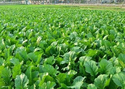 蔬菜配送公司_提供专业靠谱的蔬菜配送服务