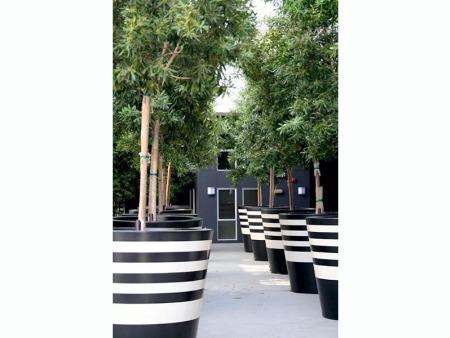兰州屋顶绿化-提供专业的甘肃园林绿化工程