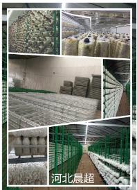 辽宁食用菌网格|衡水区域有品质的食用菌网格厂家