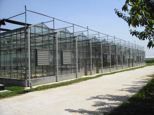 现代连栋玻璃温室承建|连栋玻璃温室有哪些优势/造价多少