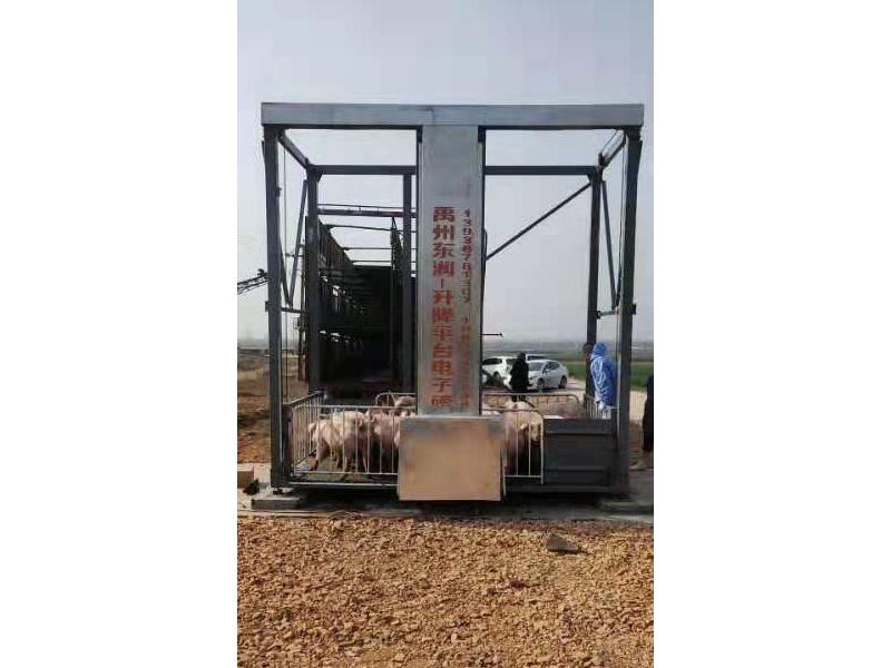 禹州升降装猪台-许昌哪里有供应实用的装猪台