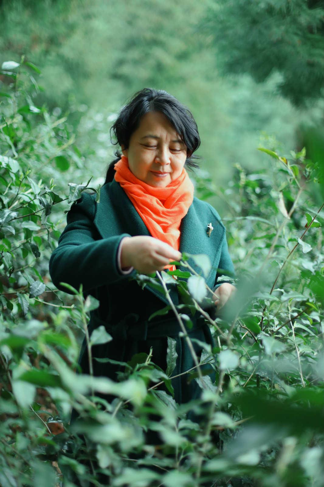 茶叶公司厂家批发-销量好的茶叶出售