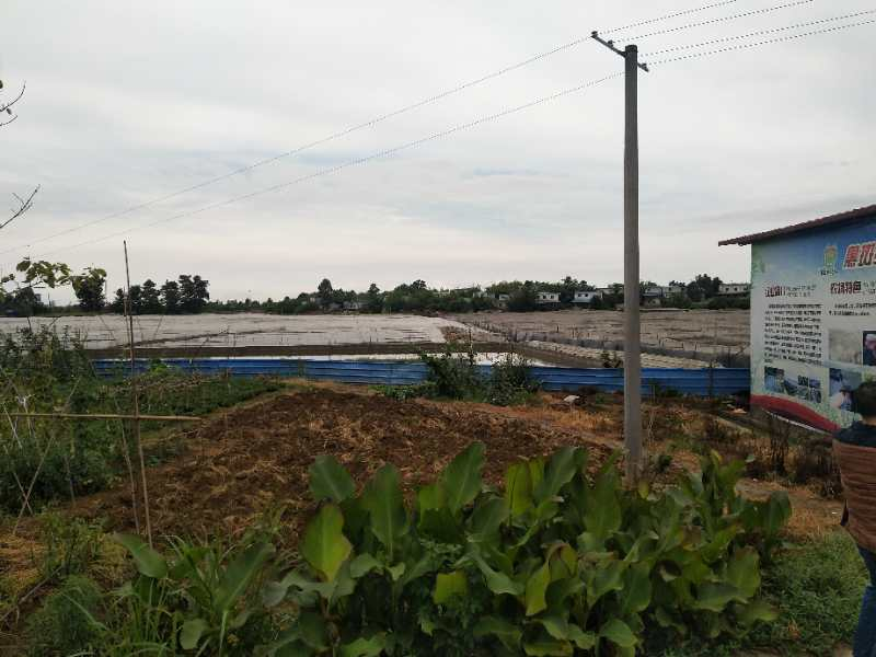 猪饲料配方|四川优良的优质饲料生产基地