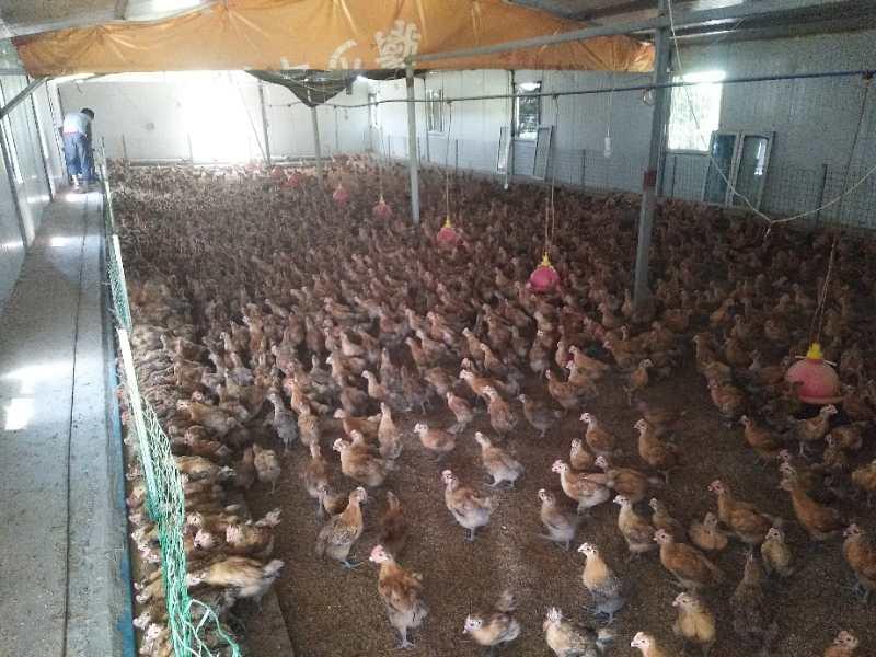 實惠的水產飼料-想買不錯的家禽飼料,就到成都市久龍飼料