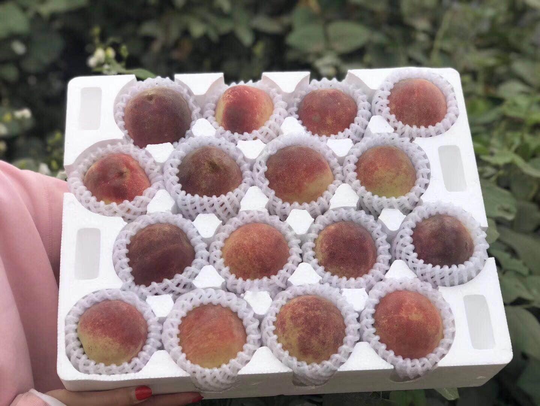 山东地区好的水果泡沫托 6孔水果泡沫托批发
