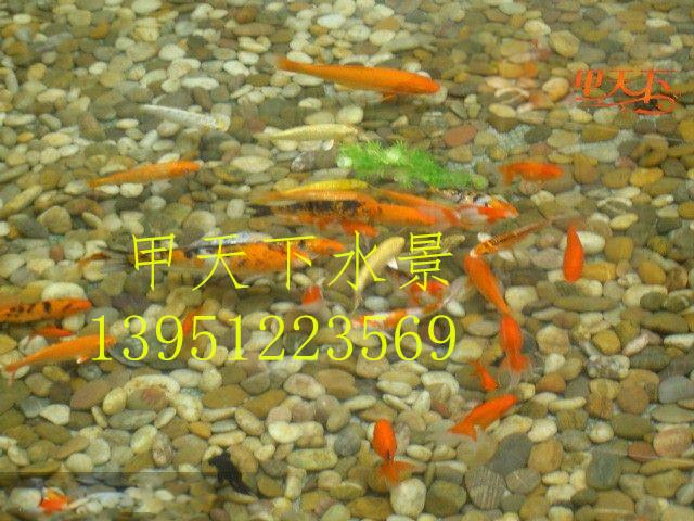 上海市企業單位、錦鯉魚池清洗改造工程。