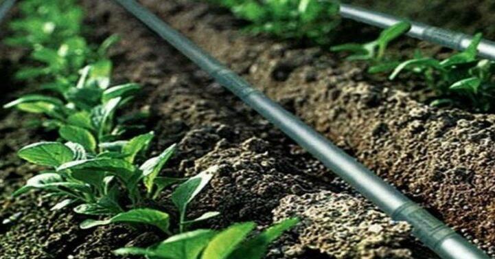 滴灌厂家-划算的滴灌就在泽润节水