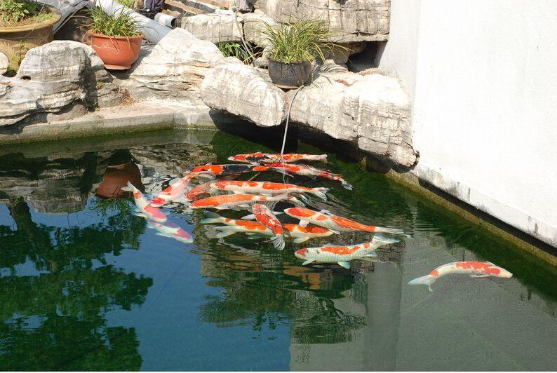 合肥市入户花园鱼池循环过滤设计、施工!