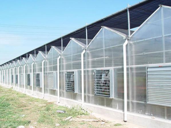 阳光板温室,阳光板温室承接,阳光板温室建造