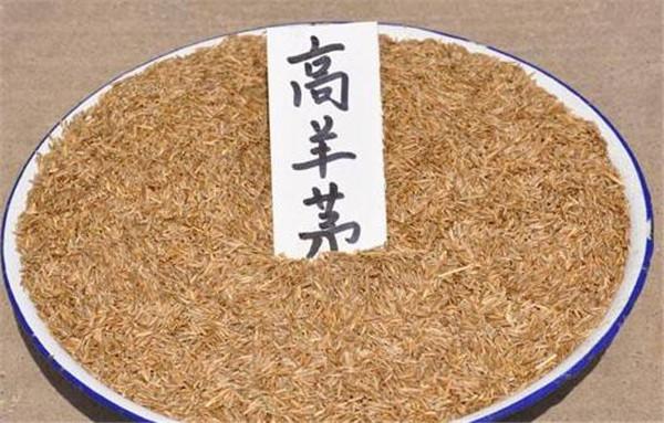 四川草坪種子批發商-西藏春凱生態農牧開發垂穗披堿草種子
