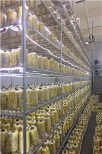 河北桑黄出菇架-河北桑黄出菇架供应