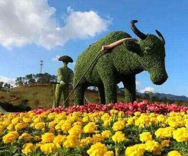 動物綠雕公司 江蘇動物綠雕制作廠家