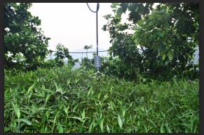 哪里有高掛式噴灌頭-有品質的果園高掛式噴灌頭品牌介紹