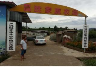 台湾龙虾饲料批发厂家|供应四川优惠的饲料