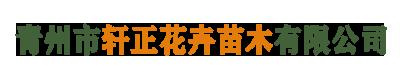青州市轩正花卉苗木有限公司