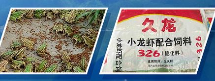 浙江淡水鱼配合饲料批发-划算的饲料哪里有