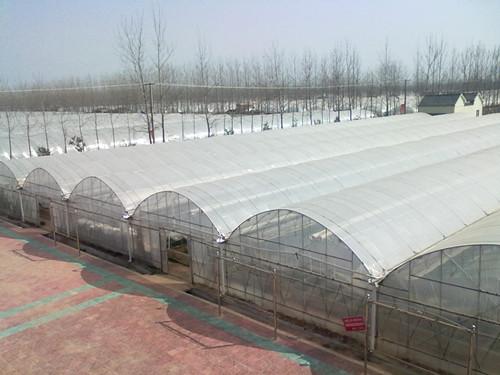 温室大棚/蔬菜花卉大棚/薄膜温室青州万红温室园艺工程有限公司