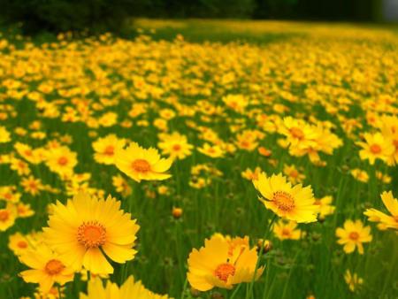 宿根花卉-供應山東優惠的宿根花卉