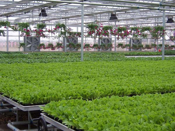 智能全自動水肥一體化哪家有?沃普智能蔬菜植物工廠