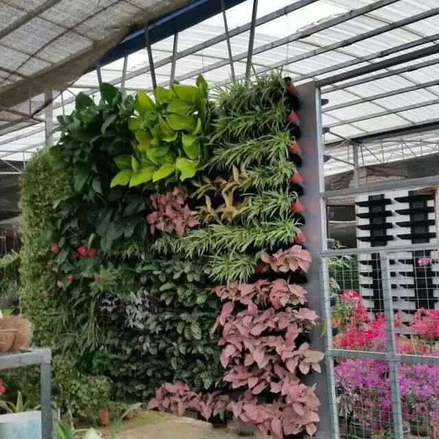 植物墻_廣東信譽好的垂直立體綠化生態設計推薦
