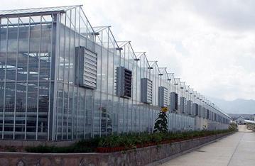 玻璃溫室大棚承接|放心可靠的玻璃溫室大棚哪裏有