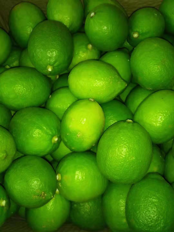 水果茶专用柠檬批发|福建性价比高的台湾四季香水柠檬出售