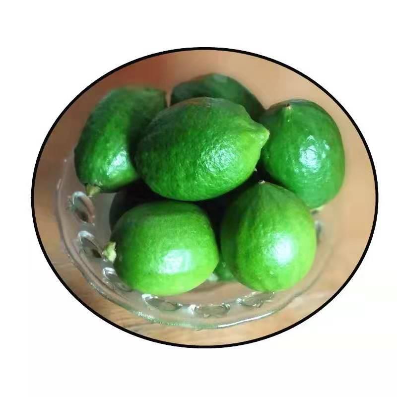 宁德台湾四季柠檬批发|销量好的台湾四季香水柠檬出售