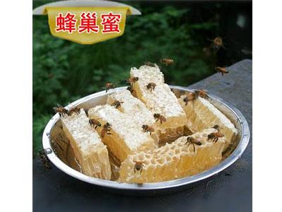 南陽蜂巢蜜出售-口碑好的蜂巢蜜上哪買【武行金蜂】