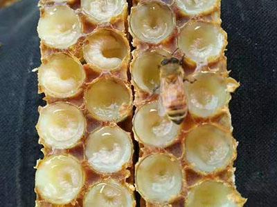方城蜂王漿出售-南陽哪里有供應優惠的蜂王漿