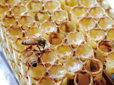 新野蜂王浆哪家好_南阳蜂王浆生产厂家【蜂花源合作社专业供应】