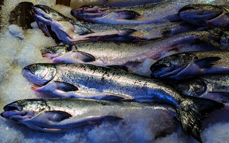埃及冷冻鲜鱼进口代理,熙海恒业一条龙服务到底