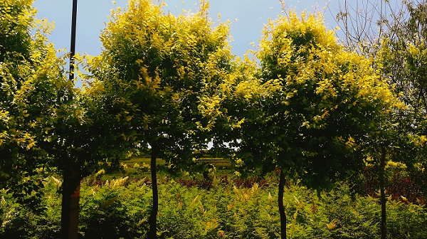 呼市123果_想要品种好的果树树苗就来绿田农林伟德国际娱乐954