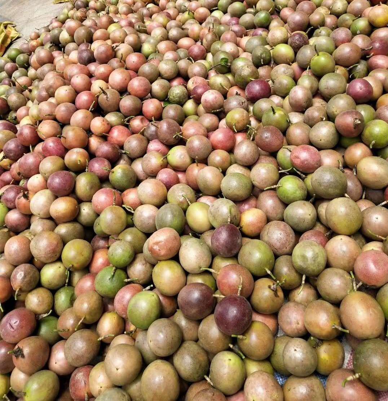 梅州百香果|供應湖南陳海龍生態農業價格劃算的百香果