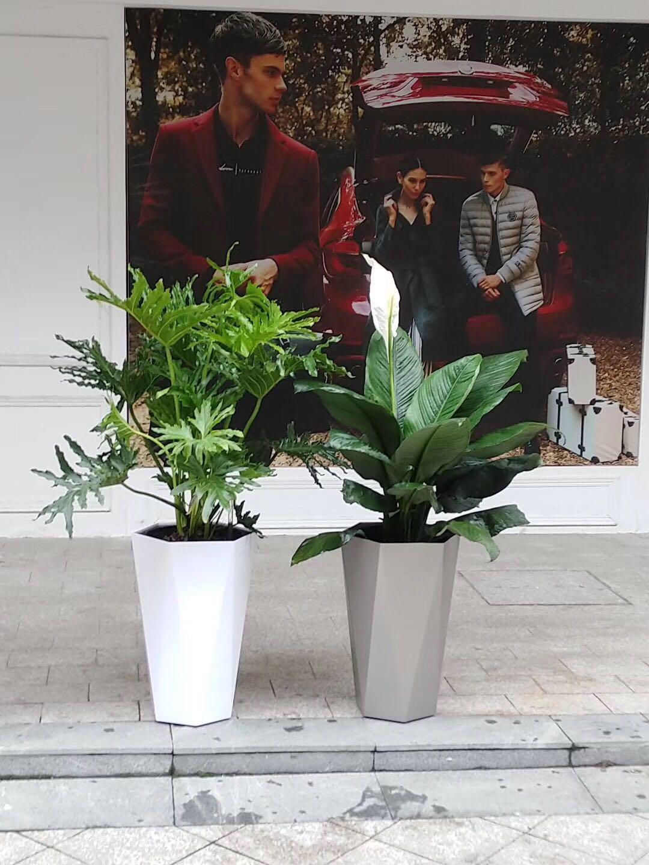 哈尔滨园林绿化|哈尔滨花卉租赁-认准哈尔滨书雅园艺