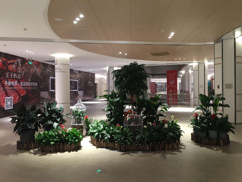 哈尔滨花卉租赁|哈尔滨园林绿化工程-哈尔滨书雅