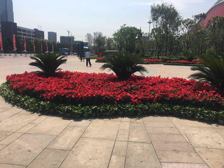 哈尔滨园林绿化工程|哈尔滨绿植墙-就来哈尔滨书雅园艺