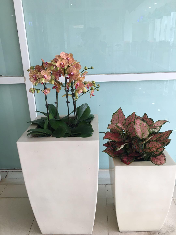 哈尔滨花卉租赁|哈尔滨园林绿化租摆-推荐哈尔滨书雅园艺