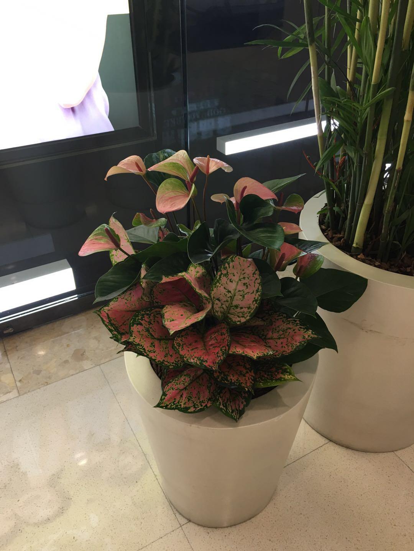 找哈尔滨绿植墙|找哈尔滨花卉租赁-来找哈尔滨书雅