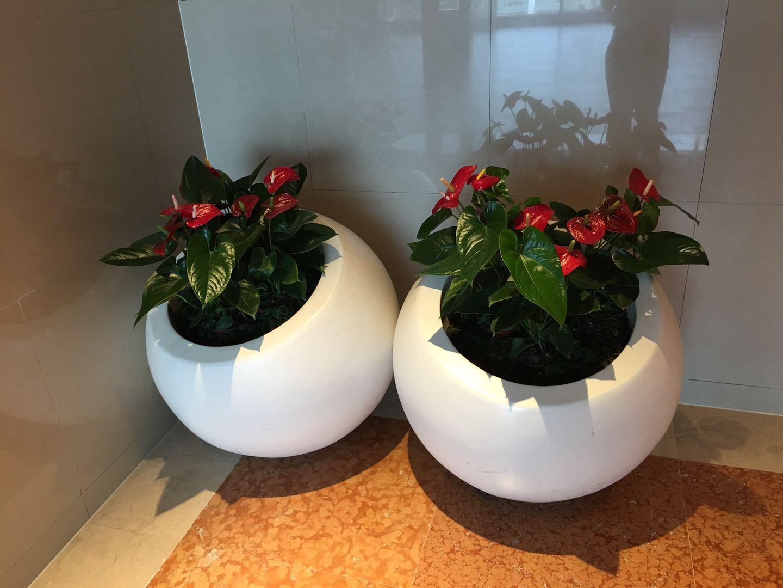 哈尔滨花卉租赁|找哈尔滨绿植墙-来哈尔滨书雅