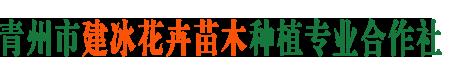 青州市建冰花卉苗木种植专业合作社