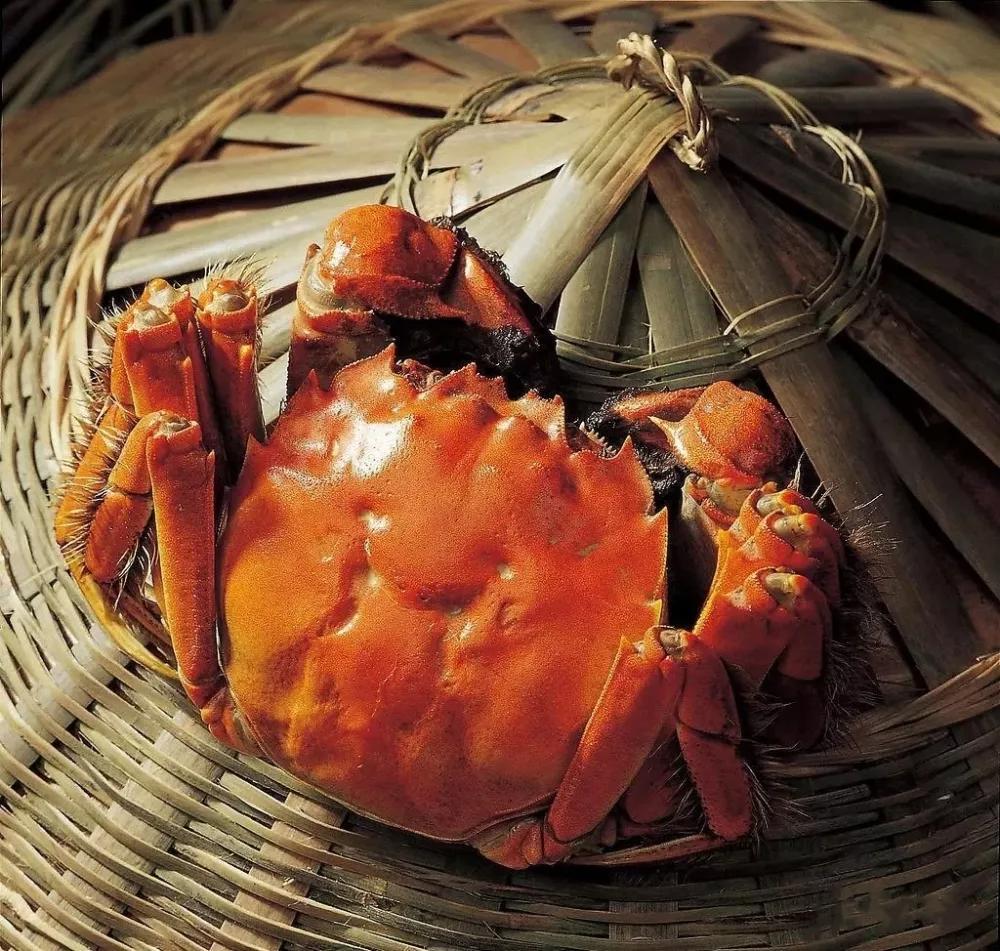 盤錦稻田河蟹哪家有|想買好的稻田蟹就到量子王二力河蟹