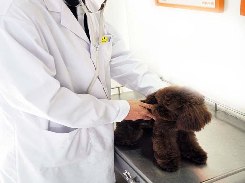 动物医院排行-吉林口碑好的动物医院推荐