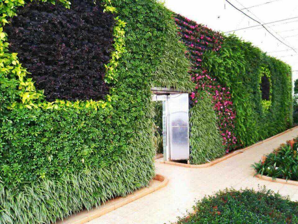 深圳植物綠墻公司|廣州信譽好的垂直立體綠化生態設計公司推薦