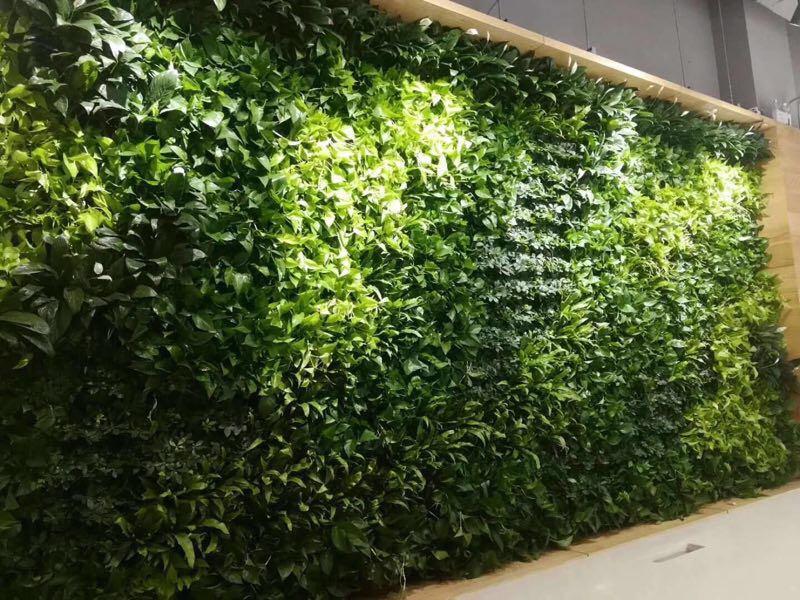 哈尔滨绿植墙|哈尔滨花卉租赁-哈尔滨书雅