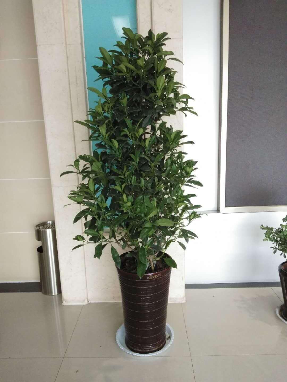 山東專業的綠植生產基地,沂水綠植哪家好