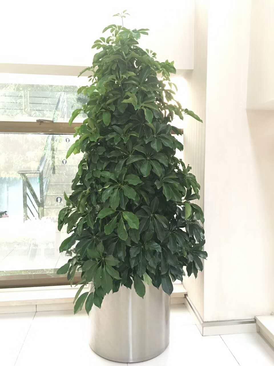 大量供应优惠的盆栽|沂南哪里有卖盆栽的
